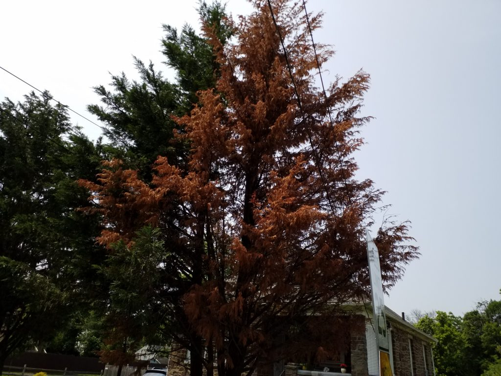 tree care norristown pa
